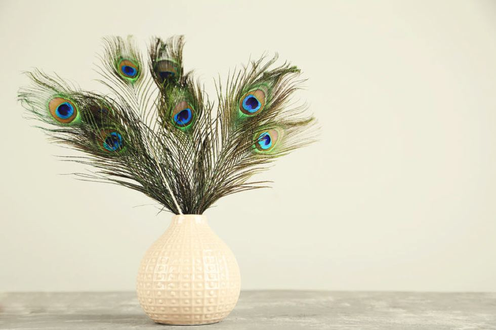 plumes decoration
